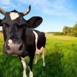 Електропастирите – важна част от фермата